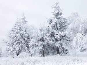 Winter: One of the Earth's four temperate seasons, occurring between autumn and spring
