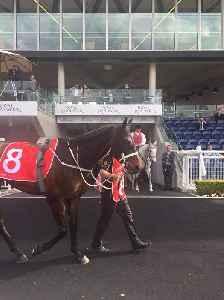 Winx (horse): Australian thoroughbred horse