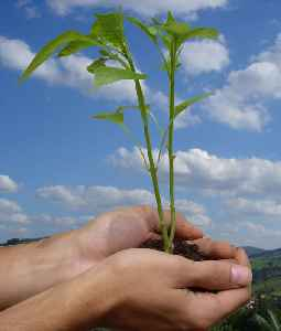 World Environment Day: Day established by the United Nations Environment Programme