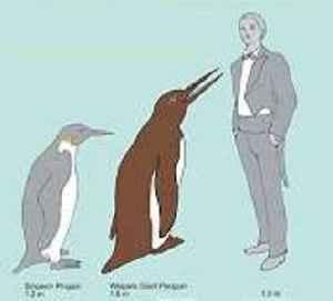 New Zealand schoolchildren discover new species of giant penguin