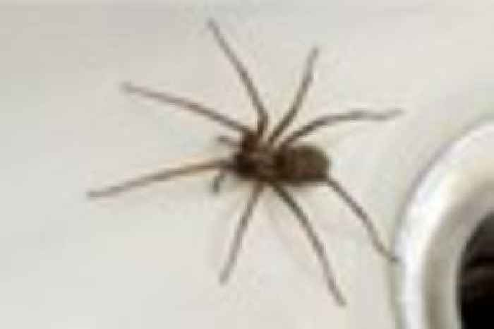 How to get rid of spiders from your home one news page for How to get rid of spiders in the house uk