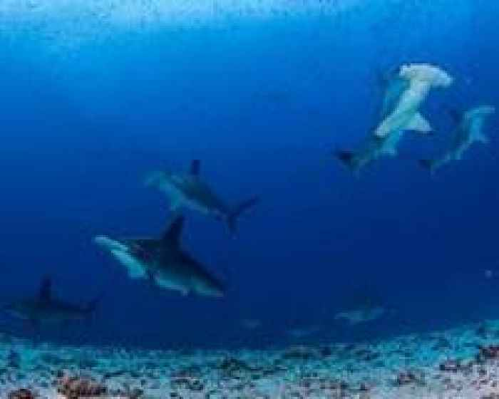 Study: Sharks have personalities