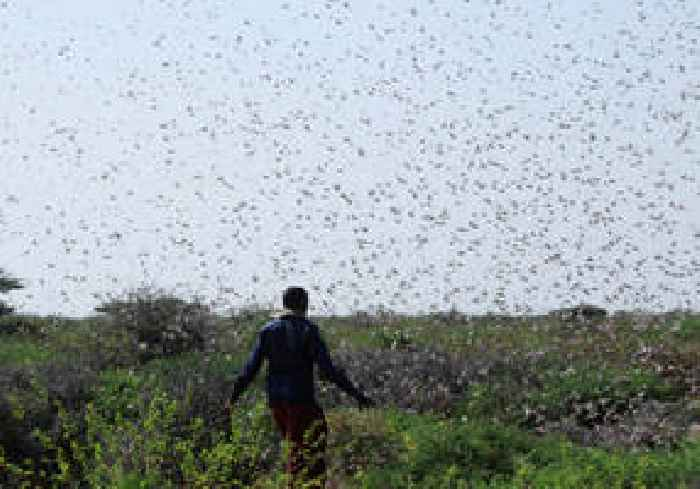 'Devastating plague of locusts' poses threat to east - One ...