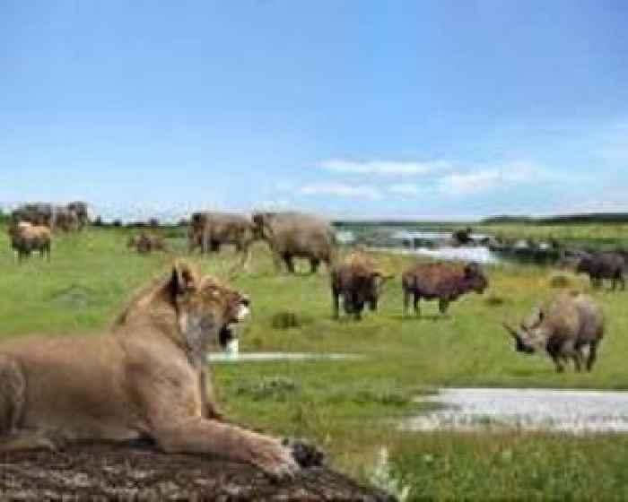 Virus lockdown boosts South African virtual safari tours
