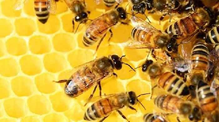 Saving Pollinators From An Imaginary Bee-Pocalypse – OpEd