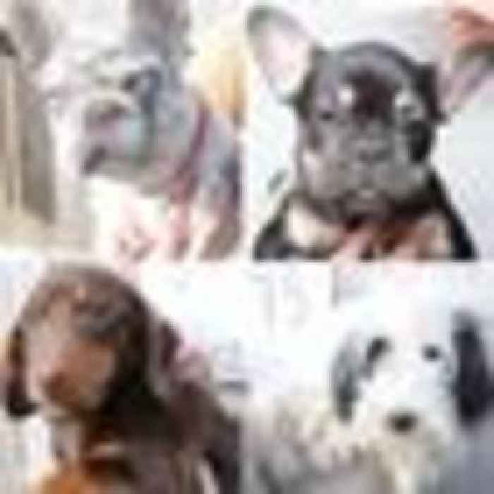 Do you know these dogs? Police try to reunite dozens of pooches with their owners after raid