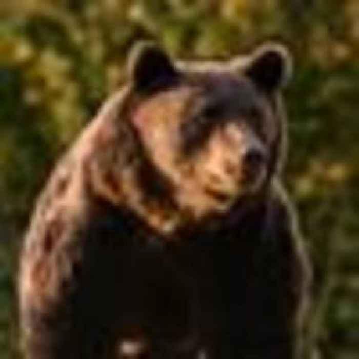 Liechtenstein prince accused of killing Romania's largest bear