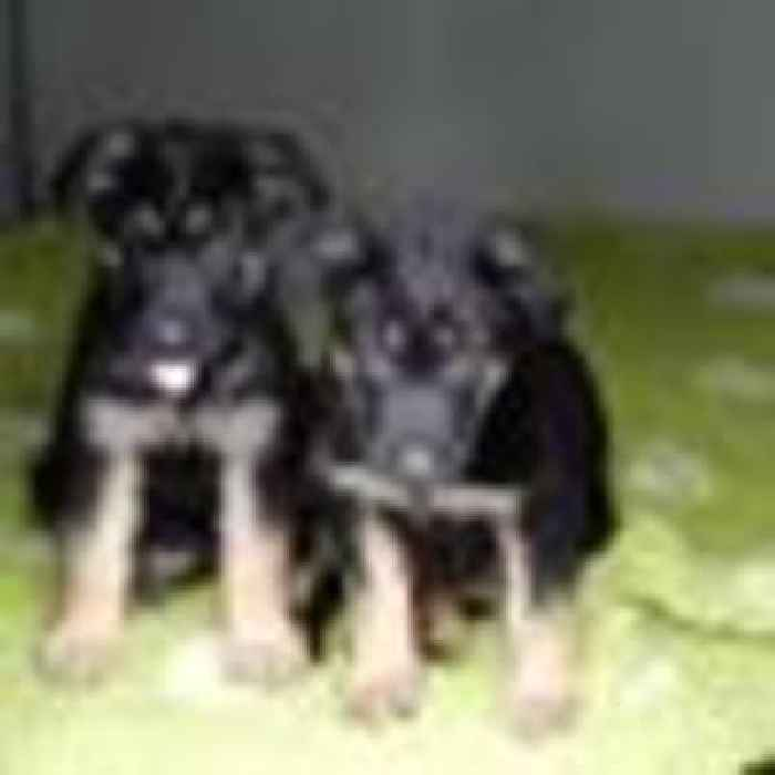 Met Police welcome seven puppies in memory of sergeant killed on duty