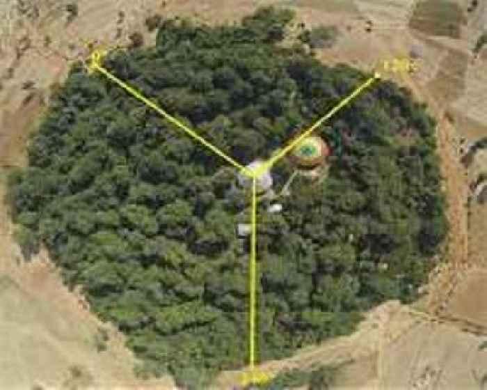 Ethiopia's Abiy kicks off massive tree-planting drive