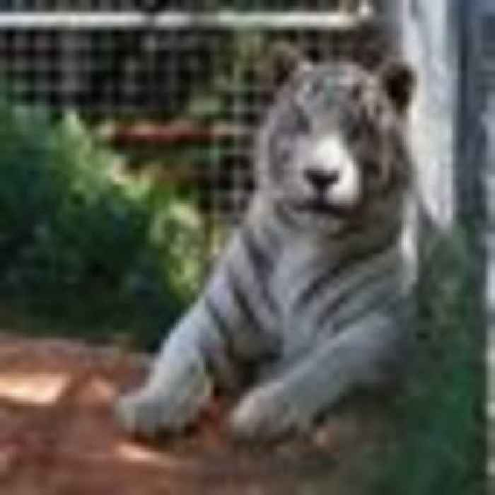Officials seize 68 big cats from Tiger King star's animal park