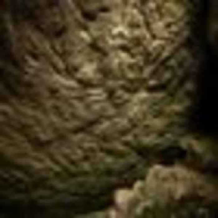 'An incredible discovery': Prehistoric animal carvings found in Scotland for first time