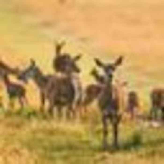 Tory MP fined after his puppy caused deer stampede in London park