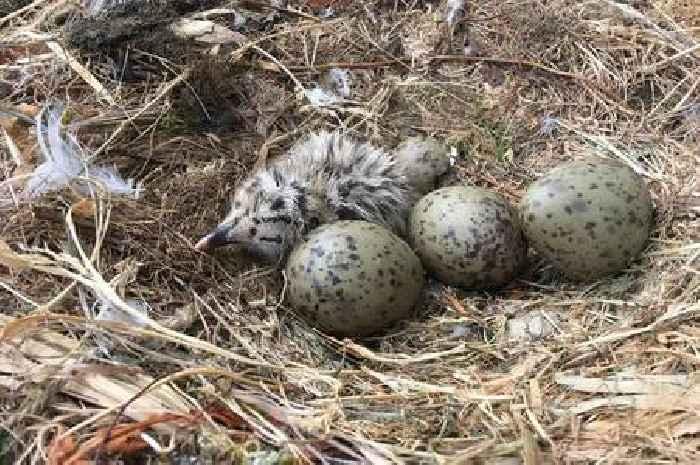 Seabird eggs contaminated with plastic additives – study