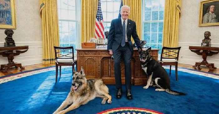 Biden Dog Champ Dies