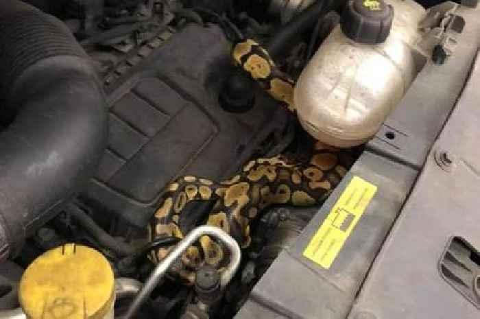 Mechanic finds missing python under car bonnet during MOT