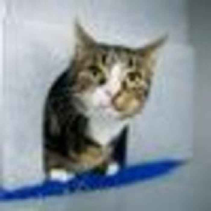 Trial into Brighton cat killings gets underway as security guard denies charges
