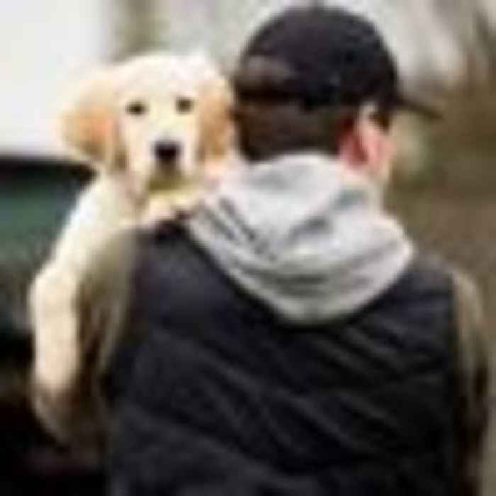 'It should be classed as kidnap': Parliament set to debate proposals to make it easier to find stolen pets