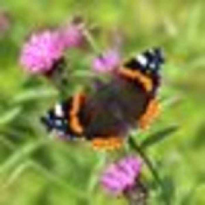 Britons urged to count butterflies amid fears cold and wet spring has hit numbers
