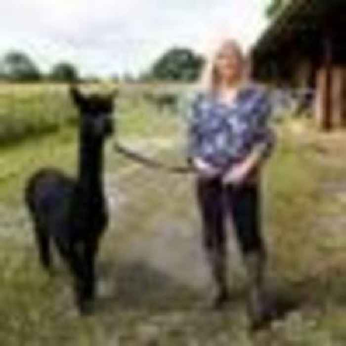 Geronimo the alpaca set to die after No 10 refuses stay of execution