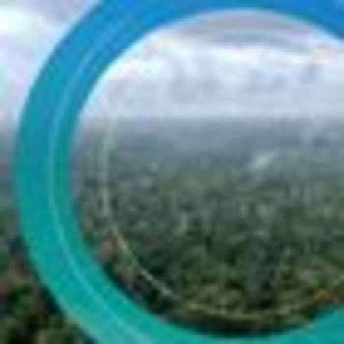 'Very, very difficult' to protect Great Congo Basin unless Gabon rewarded for conservation efforts, minister warns