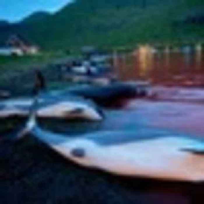 Slaughter of dolphins on North Atlantic islands sparks debate on traditions