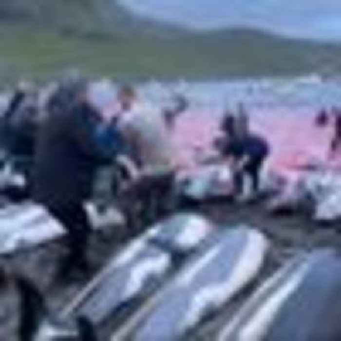 Faroe Islands pledges review of dolphin killing regulations after uproar over record slaughter