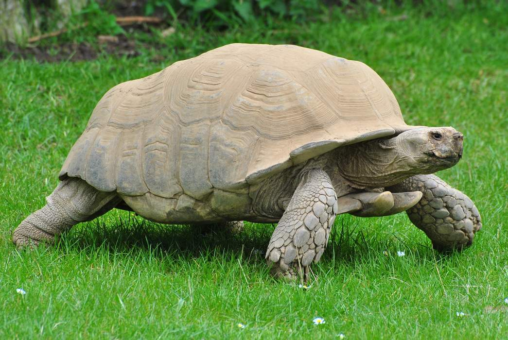 Therapy turtle helps senior center residents