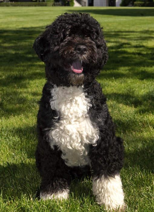 The Obamas' Dog, Bo, Dies at 12 After Cancer Battle