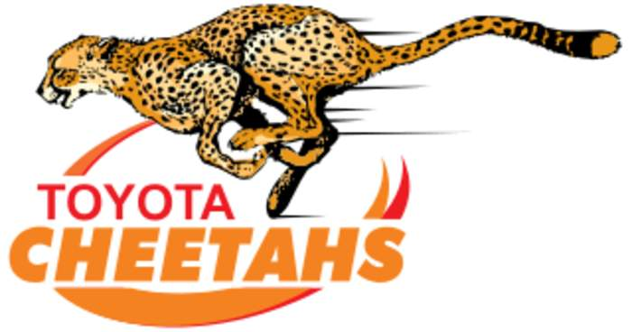 News24.com | EXCLUSIVE: Ex-Cheetahs centre William Small-Smith chats to Sport24