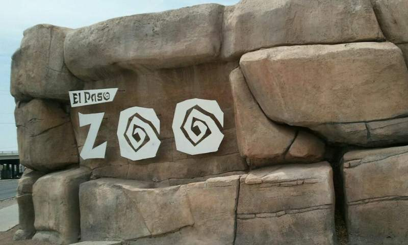 Woman who climbed into El Paso Zoo spider monkey exhibit fired: report