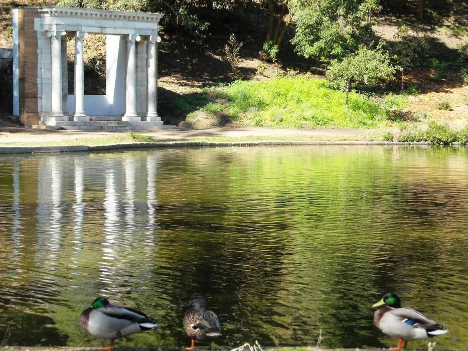 A Post-Pandemic Question: Should Cars Return to Golden Gate Park?