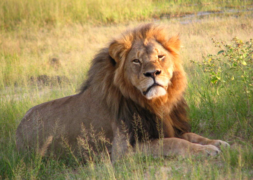 Cecil the Lion hunter expects to be cleared of charges