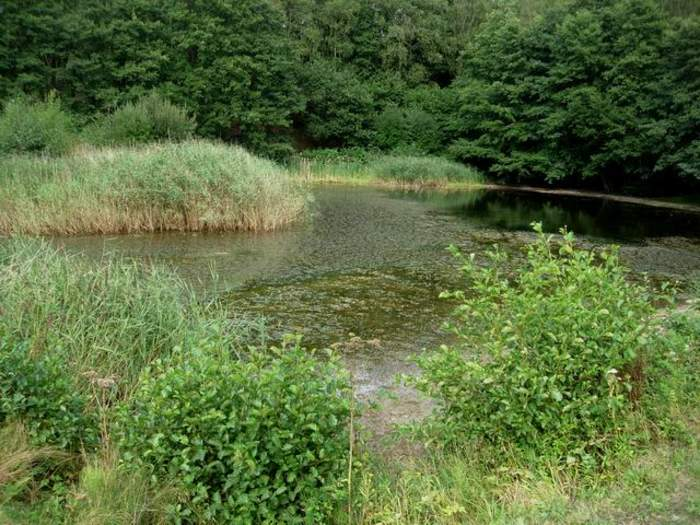 Two-year-old dies after being found in Swanwick Lakes