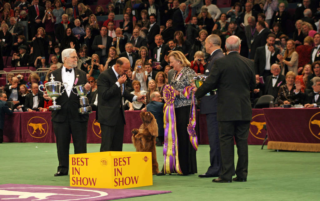 Westminster Dog Show to crown a winner Tuesday night