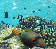 Scientists warn of 'irreversible' damage to marine life due to CO2 emissions
