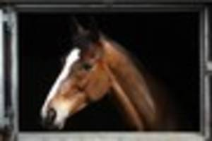 Vets who treated Kauto Star shed light on his fatal injuries
