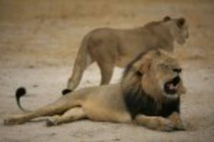 American dentist sought in killing of Cecil, Zimbabwe's beloved lion