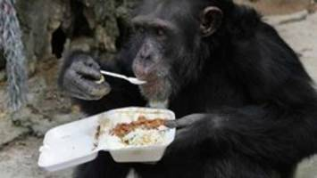 Chimps in New York animal rights lawsuit to be retired from lab