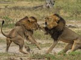 Cecil the lion's brother Jericho shot dead by poachers in Zimbabwean park