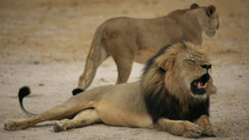 Cecil the lion's brother Jericho appears alive and well, says researcher