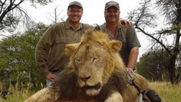 air canada bans shipments of hunting trophies after killing of cecil the lion