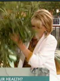 This Morning: Ruth Langsford deals with tree falling on her face live on air