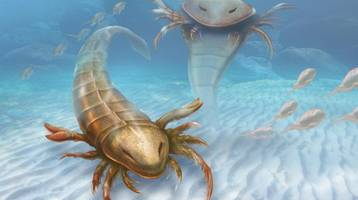 Newly discovered ancient sea scorpion was 1.5 meters long