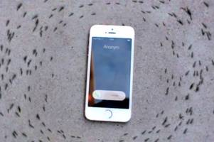 Why are these ants circling an iPhone? Watch the strange phenomenon here
