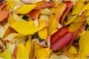 autumnal equinox today but what does it mean?