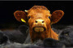 case of mad cow disease confirmed in wales