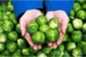 Monster Morrison's sprouts strike fear into Newquay children