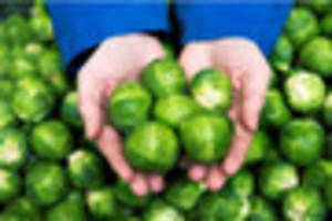 Monster Brussels sprouts to go on sale in Lincolnshire supermarke...
