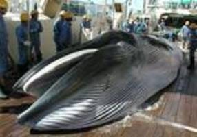 Japan to resume 'research' whaling in Antarctic: Media