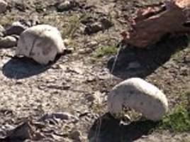 In Iraq three more mass graves are discovered east of Sinjar